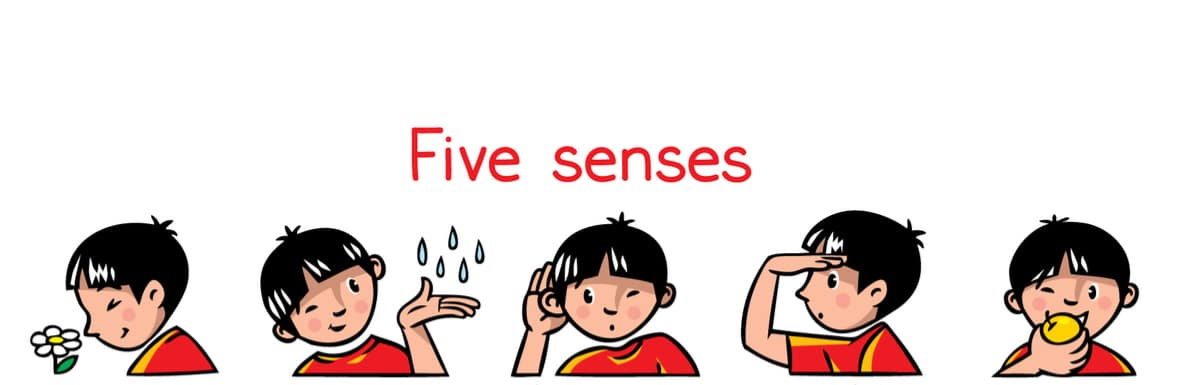 Responsive of the week – Outdoor and the 5 senses