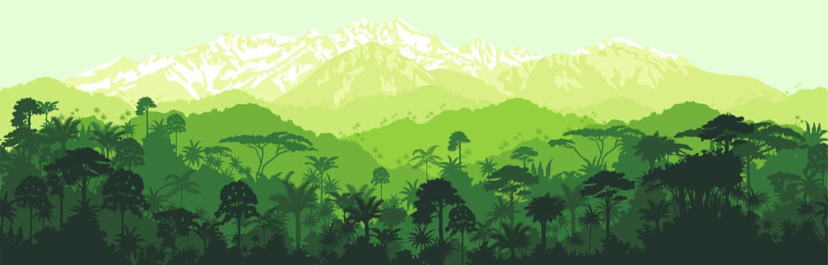 Resource of the Month – Second Level (upper Primary) – Spanish – Rainforest