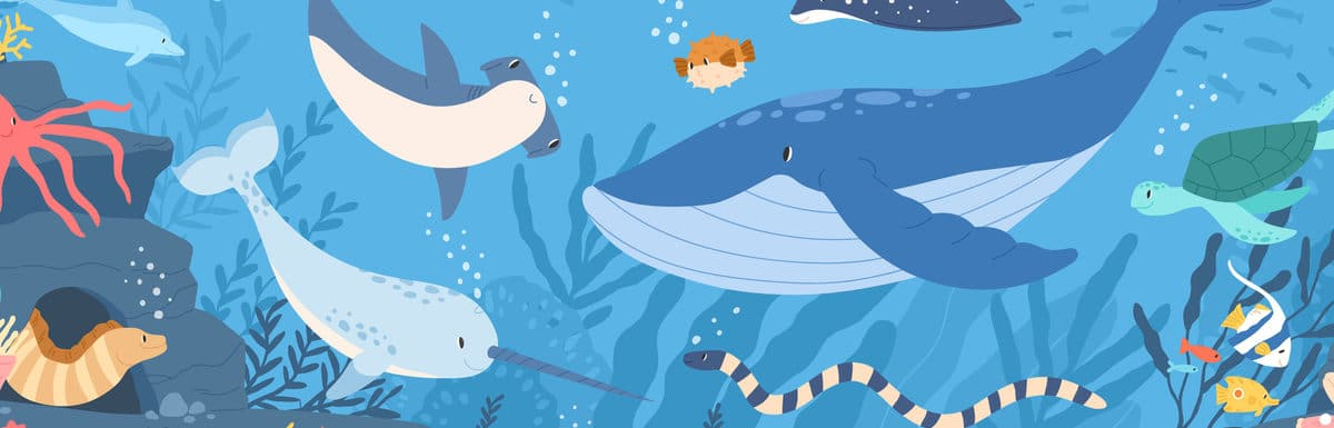 Resource of the Month – Early Learning – French – Sea animals & Colours